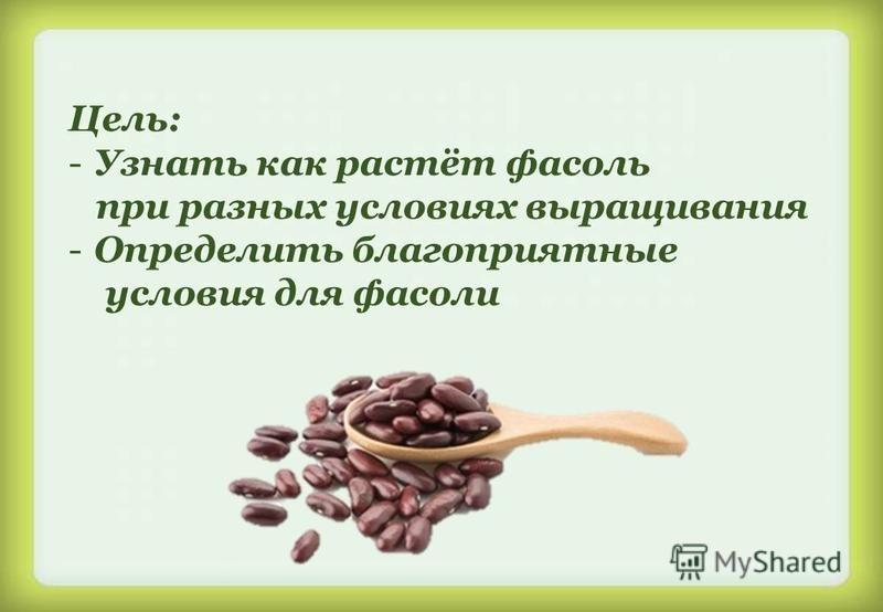Цель: -Узнать как растёт фасоль при разных условиях выращивания -Определить благоприятные условия для фасоли
