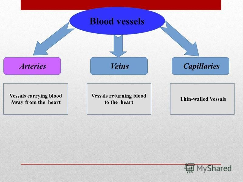 Blood vessels Arteries Veins Capillaries Vessals carrying blood Away from the heart Vessals returning blood to the heart Thin-walled Vessals