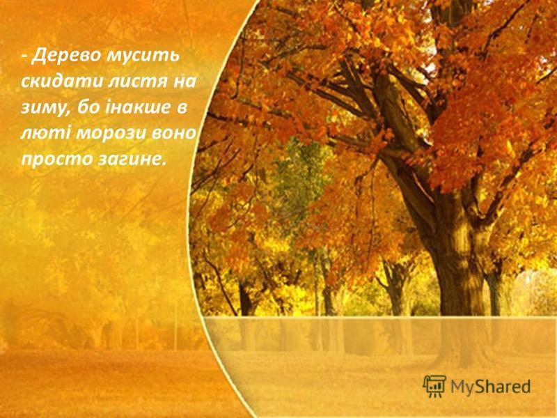 - Дерево мусить скидати листя на зиму, бо інакше в люті морози воно просто загине.