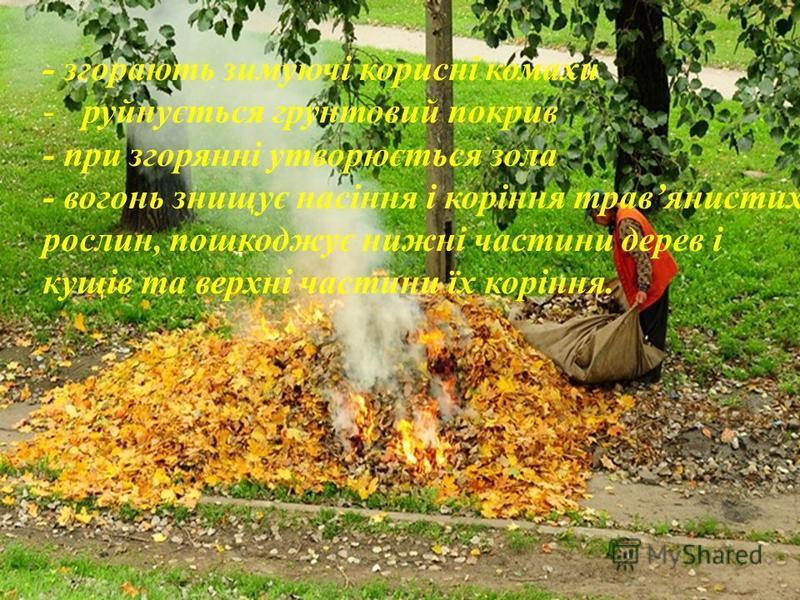 - згорають зимуючі корисні комахи -руйнується грунтовий покрив - при згорянні утворюється зола - вогонь знищує насіння і коріння травянистих рослин, пошкоджує нижні частини дерев і кущів та верхні частини їх коріння.