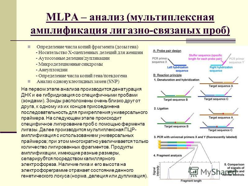 MLPA – анализ (мультиплексная амплификация лигазно-связаных проб) Определение числа копий фрагмента (дозы гена) - Носительство Х-сцепленных делеций для женщин - Аутосомные делеции/дупликации - Микроделеционные синдромы - Анеуплоидии - Определение чис