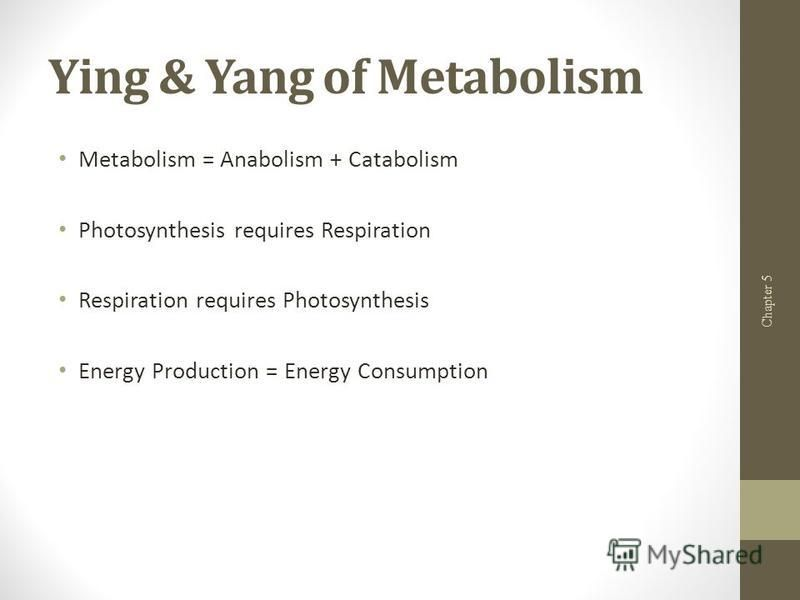 Ying & Yang of Metabolism Metabolism = Anabolism + Catabolism Photosynthesis requires Respiration Respiration requires Photosynthesis Energy Production = Energy Consumption Chapter 5