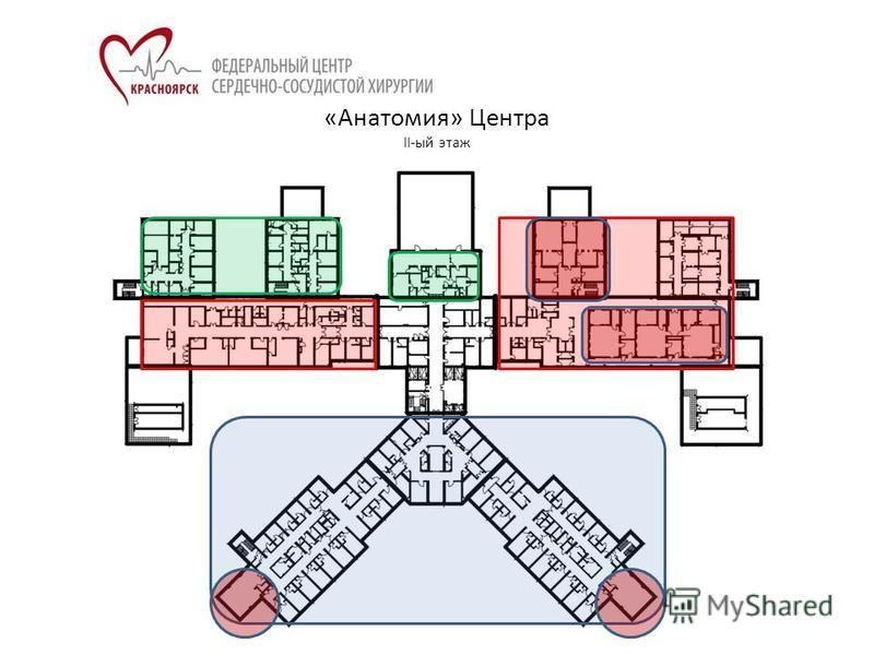 «Анатомия» Центра II-ый этаж