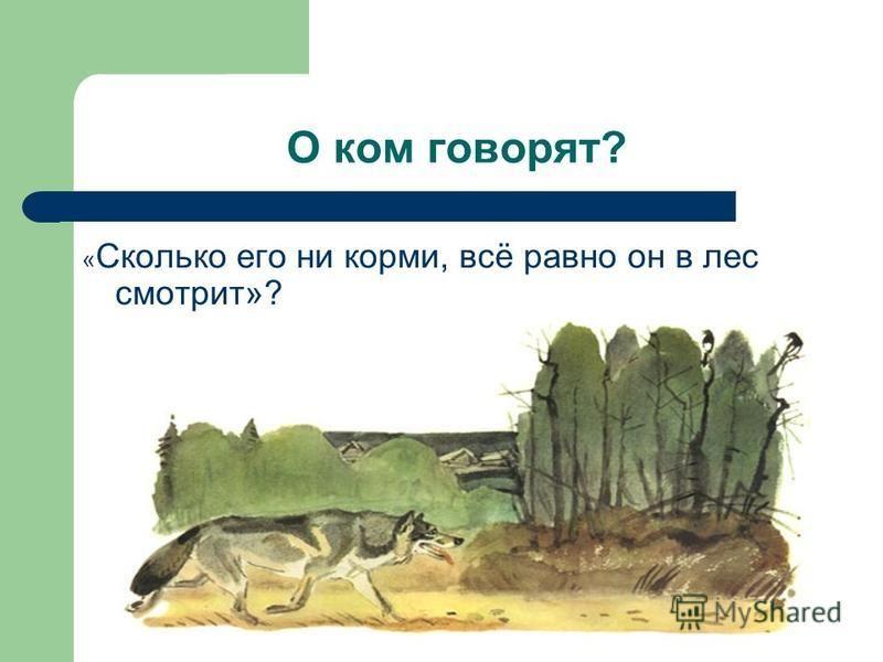 О ком говорят? « Сколько его ни корми, всё равно он в лес смотрит»?