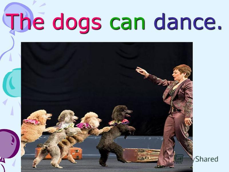 The dogs can dance.