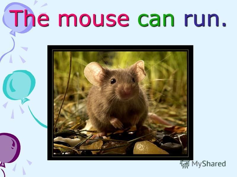 The mouse can run.