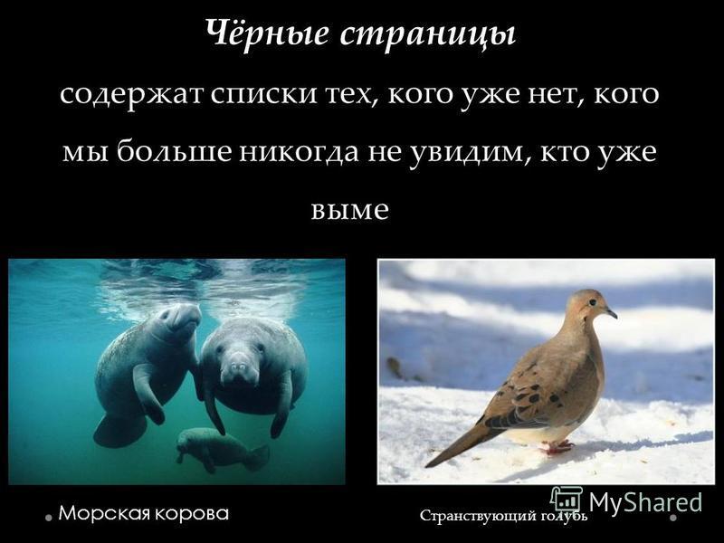 Чёрные страницы содержат списки тех, кого уже нет, кого мы больше никогда не увидим, кто уже вымер Морская корова Странствующий голубь