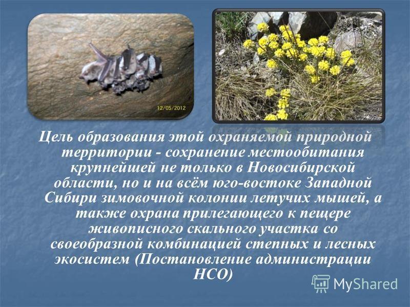 Цель образования этой охраняемой природной территории - сохранение местообитания крупнейшей не только в Новосибирской области, но и на всём юго-востоке Западной Сибири зимовочной колонии летучих мышей, а также охрана прилегающего к пещере живописного