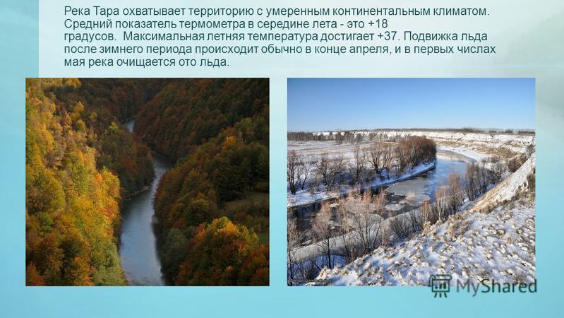 Река Тара охватывает территорию с умеренным континентальным климатом. Средний показатель термометра в середине лета - это +18 градусов. Максимальная летняя температура достигает +37. Подвижка льда после зимнего периода происходит обычно в конце апрел