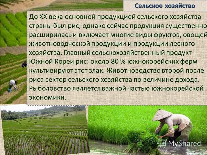 До XX века основной продукцией сельского хозяйства страны был рис, однако сейчас продукция существенно расширилась и включает многие виды фруктов, овощей, животноводческой продукции и продукции лесного хозяйства. Главный сельскохозяйственный продукт