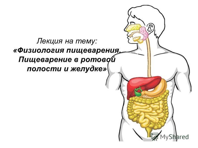Лекция на тему: «Физиология пищеварения. Пищеварение в ротовой полости и желудке»