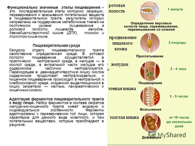 Функционально значимые этапы пищеварения – это последовательные этапы моторики, секреции, переваривания и всасывания питательных веществ в пищеварительном тракте, результаты которых направлены на поддержание метаболизма тканей на постоянном уровне: п