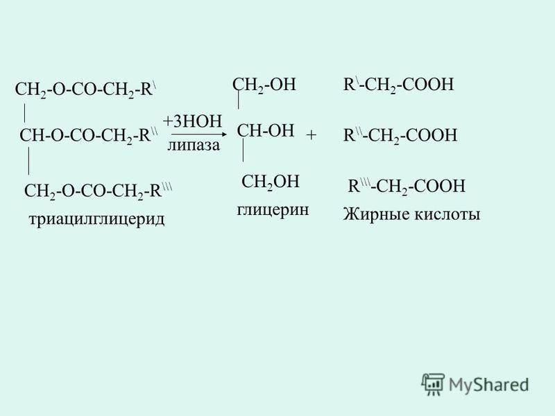 CH 2 -O-CO-CH 2 -R \ CH-O-CO-CH 2 -R \\ CH 2 -O-CO-CH 2 -R \\\ +3HOH липаза CH 2 -OH CH-OH CH 2 OH триацилглицерид глицерин + R \ -CH 2 -COOH R \\ -CH 2 -COOH R \\\ -CH 2 -COOH Жирные кислоты