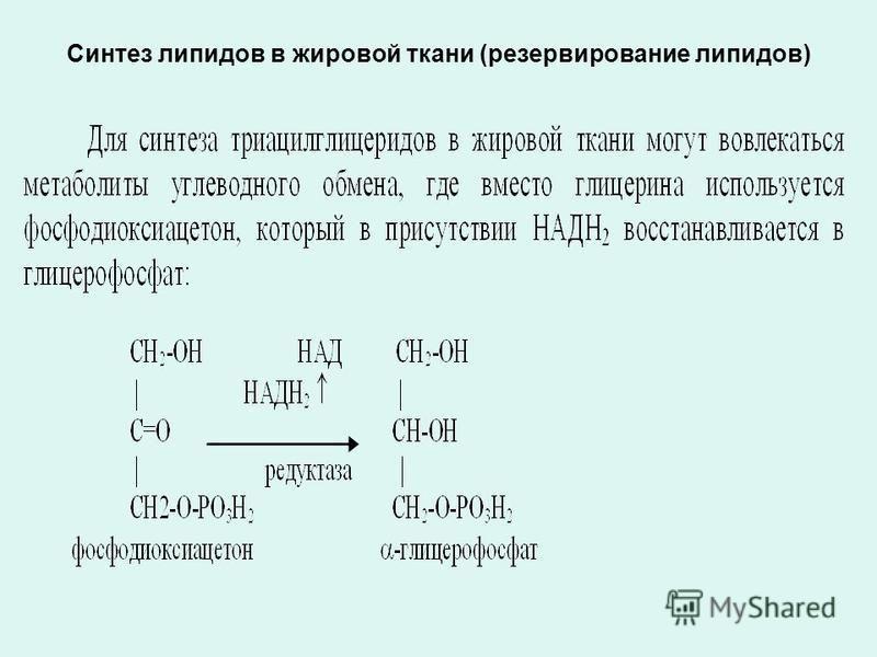 Синтез липидов в жировой ткани (резервирование липидов)