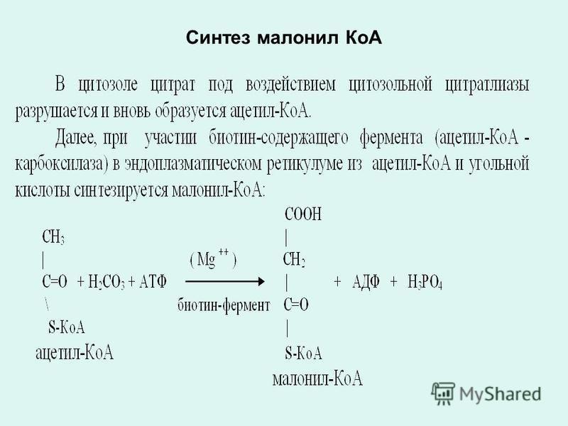 Синтез малонил КоА
