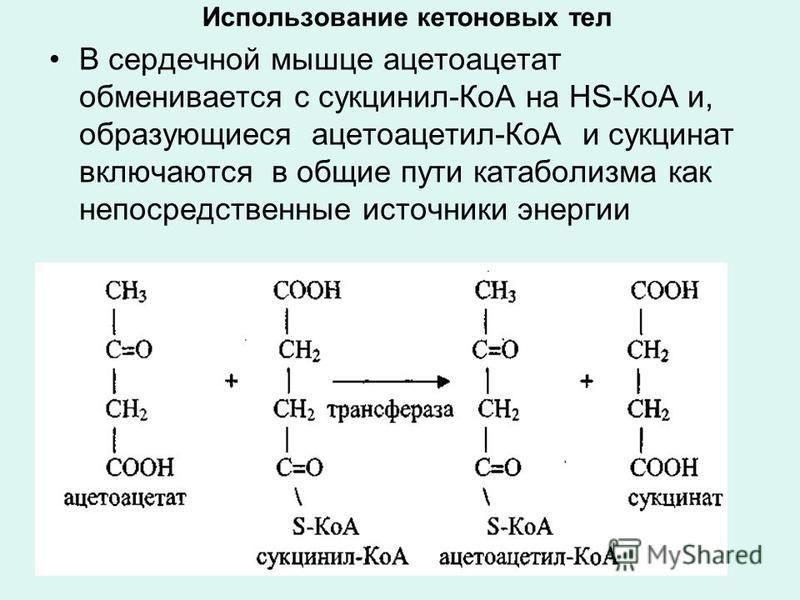Использование кетоновых тел В сердечной мышце ацетоацетат обменивается с сукцинил-КоА на НS-КоА и, образующиеся ацетоацетил-КоА и сукцинат включаются в общие пути катаболизма как непосредственные источники энергии