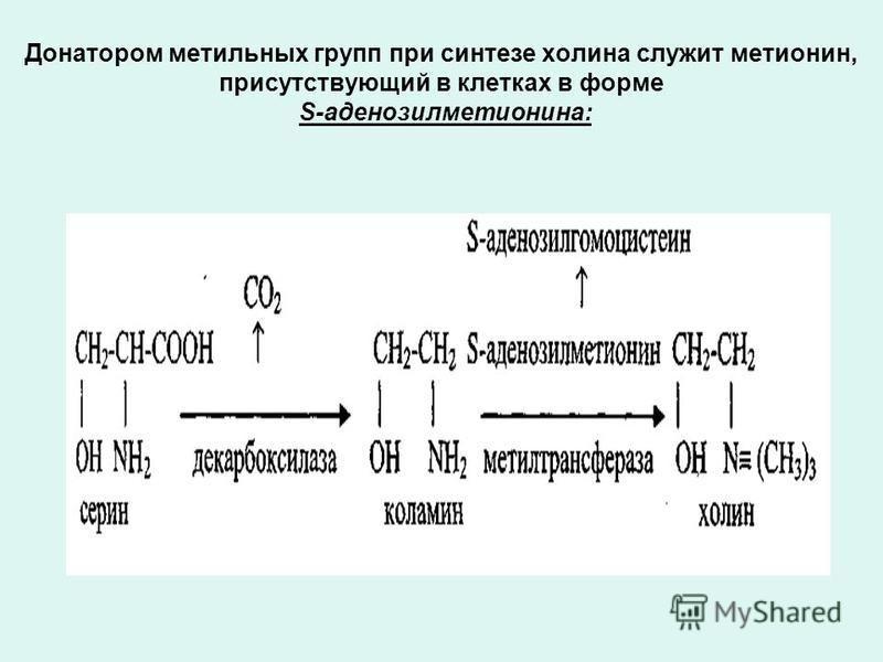 Донатором метильных групп при синтезе холина служит метионин, присутствующий в клетках в форме S-аденозилметионина: