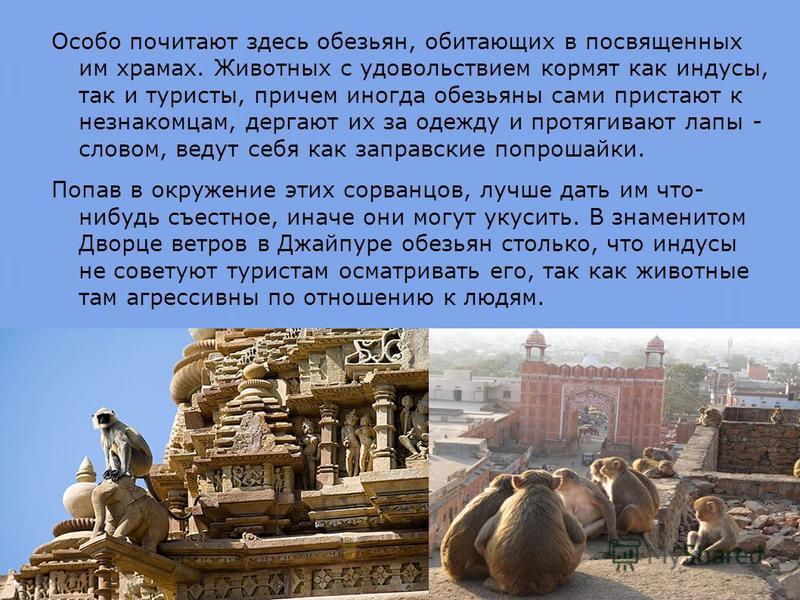 Особо почитают здесь обезьян, обитающих в посвященных им храмах. Животных с удовольствием кормят как индусы, так и туристы, причем иногда обезьяны сами пристают к незнакомцам, дергают их за одежду и протягивают лапы - словом, ведут себя как заправски