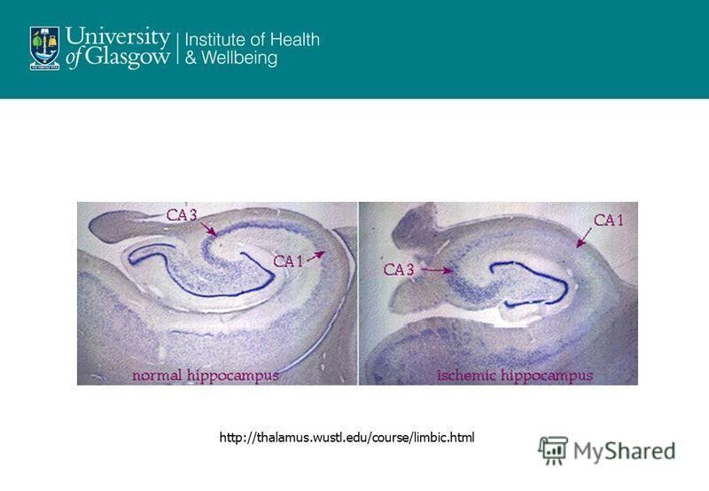 http://thalamus.wustl.edu/course/limbic.html