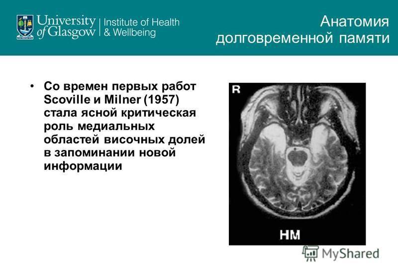 Со времен первых работ Scoville и Milner (1957) стала ясной критическая роль медиальных областей височных долей в запоминании новой информации Анатомия долговременной памяти