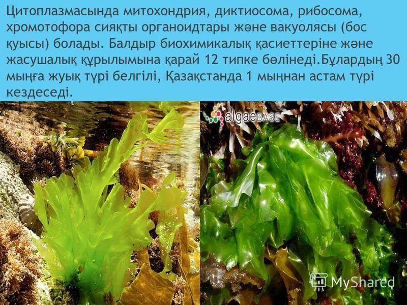 Цитоплазмастында митохондрия, диктиосома, рибосома, хроматофора сия қ ты органоид тары ж ә не вакуоляцы (бос қ уцы) болады. Баллодыр биохимикалы қ қ асиеттеріне ж ә не засушалы қ құ рилымына қ рай 12 топке б ө лінеді.Б ұ лорды ң 30 мы ңғ а жук қ т ү