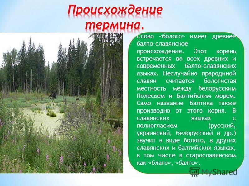СОДЕРЖАНИЕ 1. Что такое болото ? 2. Причины образования болот. 3. Классификация болот. 4. Растительность болот. 5. Значение болот.