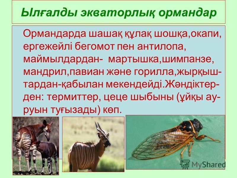 Ылғалды экваторлық ормондар Ормандарда шашақ құлақ шошқа,окапи, ергежейлі бегемот пен антилопа, маймылдардан- мартышка,шимпанзе, мандрил,павиан және горилла,жырқыш- тардан-қабылан мекендейді.Жәндіктер- ден: термистор, цеце шыбыны (ұйқы ау- руны туғыз