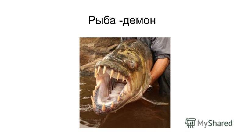 Рыба -демон