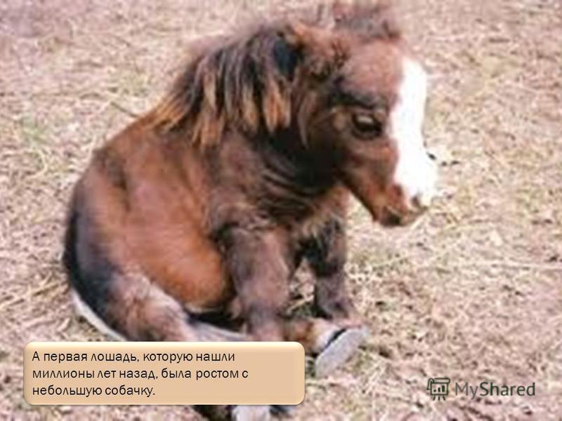 А это большой вороной конь.
