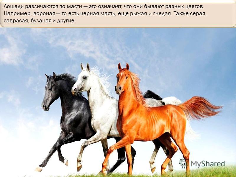 А первая лошадь, которую нашли миллионы лет назад, была ростом с небольшую собачку.