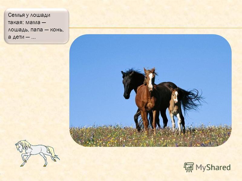 Бывают лошади с красивыми пятнами, например, вот эта посмотрите, какая красавица!