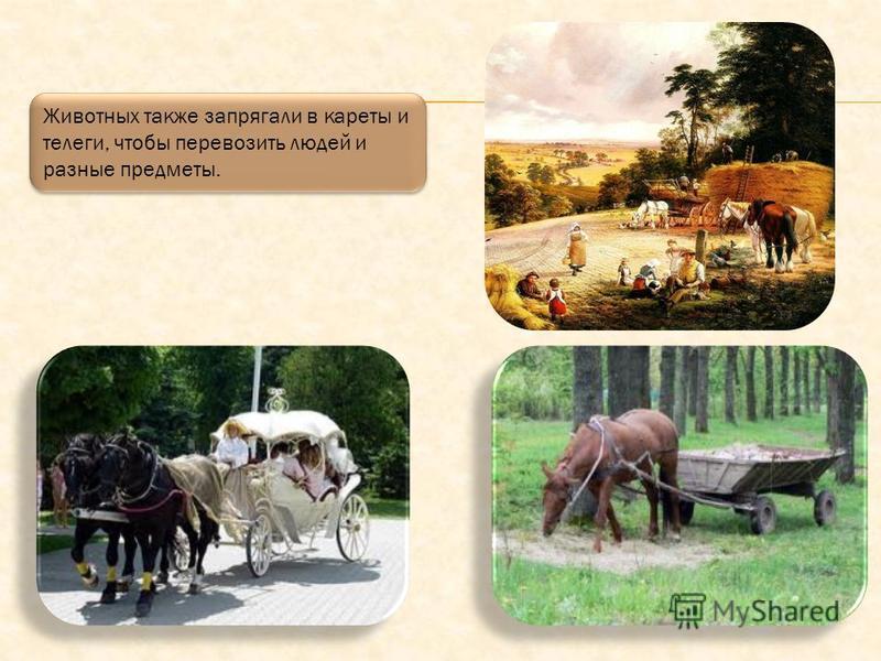 Раньше лошадий запрягали в плуги, чтобы вспахивать с их помощью поля, на которые потом высаживали овощи и злаки.