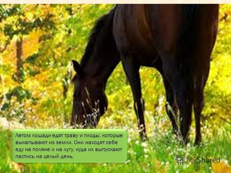 А домашние живут рядом с человеком, который строит для лошади уютный дом. Такой дом называется - конюшней.