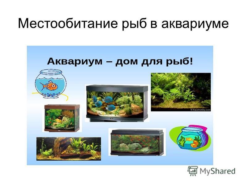Местообитание рыб в аквариуме