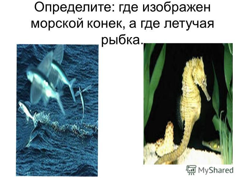 Определите: где изображен морской конек, а где летучая рыбка.