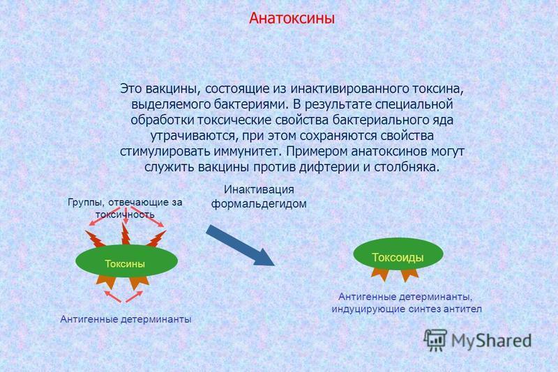Анатоксины Это вакцины, состоящие из инактивированного токсина, выделяемого бактериями. В результате специальной обработки токсические свойства бактериального яда утрачиваются, при этом сохраняются свойства стимулировать иммунитет. Примером анатоксин