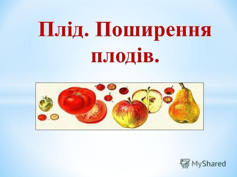 Плід. Поширення плодів.