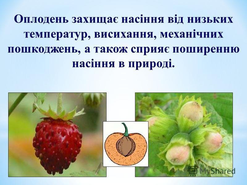 Оплодень захищає насіння від низьких температур, висихання, механічних пошкоджень, а також сприяє поширенню насіння в природі.