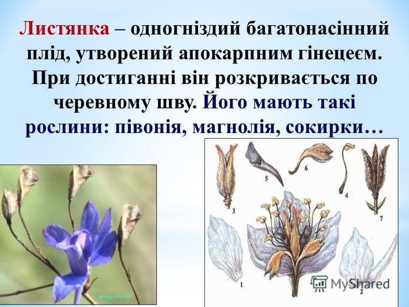 Листянка – одногніздий багатонасінний плід, утворений апокарпним гінецеєм. При достиганні він розкривається по черевному шву. Його мають такі рослини: півонія, магнолія, сокирки…