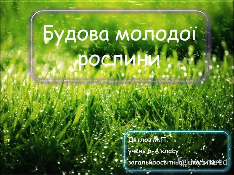 Будова молодої рослини Дятлов М.П. учень 6-А класу загальноосвітньої школи 4