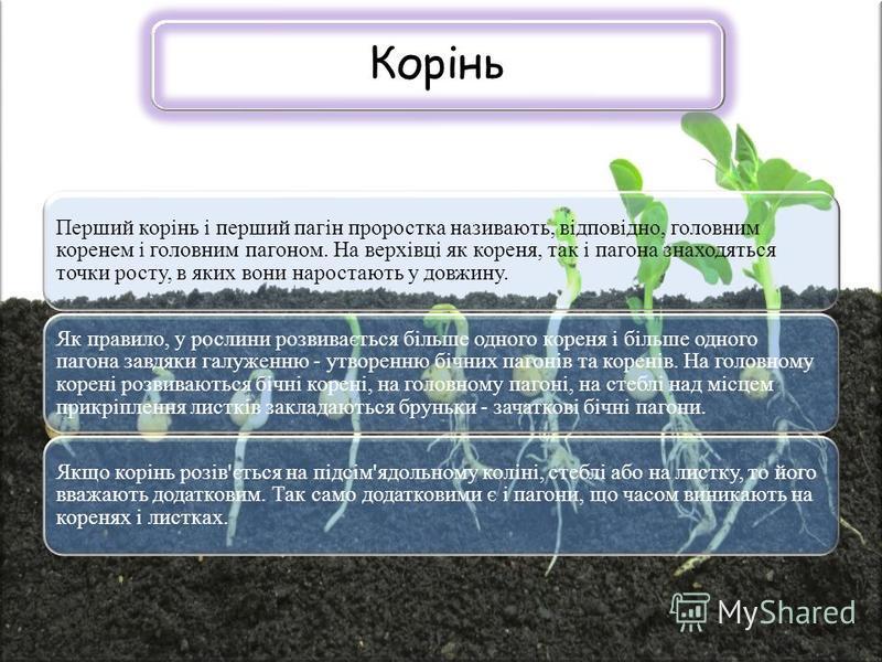 Корінь Перший корінь і перший пагін проростка називають, відповідно, головним коренем і головним пагоном. На верхівці як кореня, так і пагона знаходяться точки росту, в яких вони наростають у довжину. Як правило, у рослини розвивається більше одного