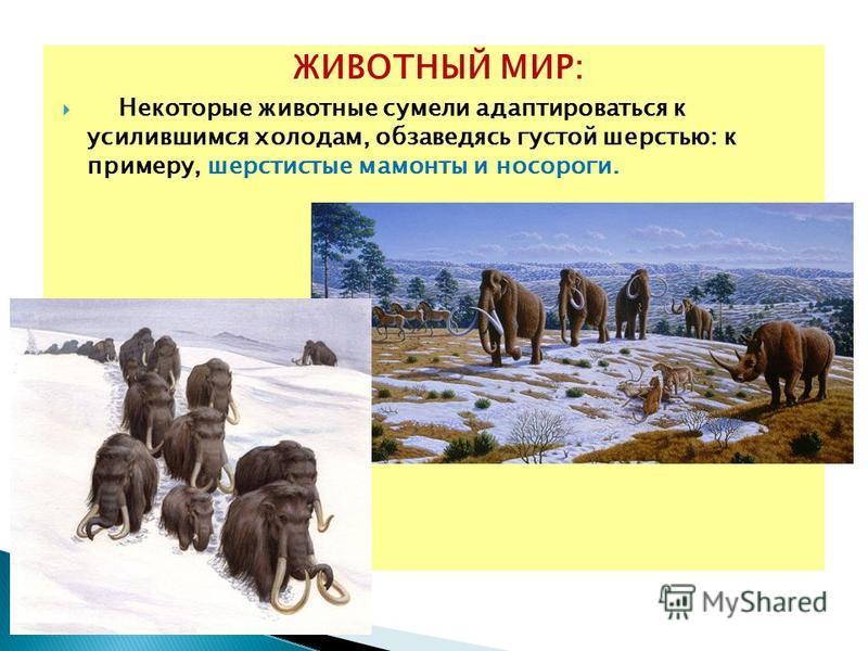 ЖИВОТНЫЙ МИР: Некоторые животные сумели адаптироваться к усилившимся холодам, обзаведясь густой шерстью: к примеру, шерстистые мамонты и носороги.