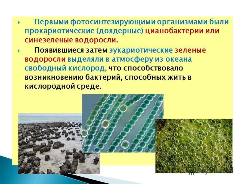 Первыми фотосинтезирующими организмами были прокариотические (доядерные) цианобактерии или сине-зеленые водоросли. Появившиеся затем эукариотические зеленые водоросли выделяли в атмосферу из океана свободный кислород, что способствовало возникновению