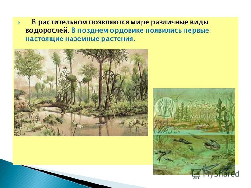 В растительном появляются мире различные виды водорослей. В позднем ордовике появились первые настоящие наземные растения.