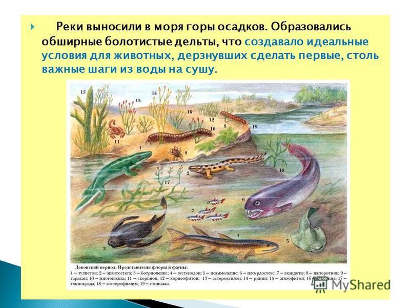 Реки выносили в моря горы осадков. Образовались обширные болотистые дельты, что создавало идеальные условия для животных, дерзнувших сделать первые, столь важные шаги из воды на сушу.