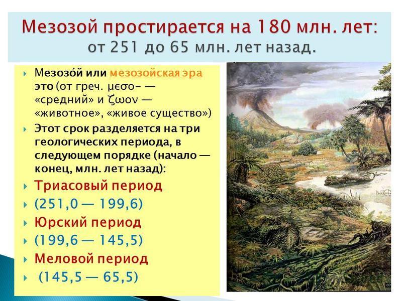 Мезозо́й или мезозойская эра это (от греч. μεσο- «средний» и ζωον «животное», «живое существо»)мезозойская эра Этот срок разделяется на три геологических периода, в следующем порядке (начало конец, млн. лет назад): Триасовый период (251,0 199,6) Юрск
