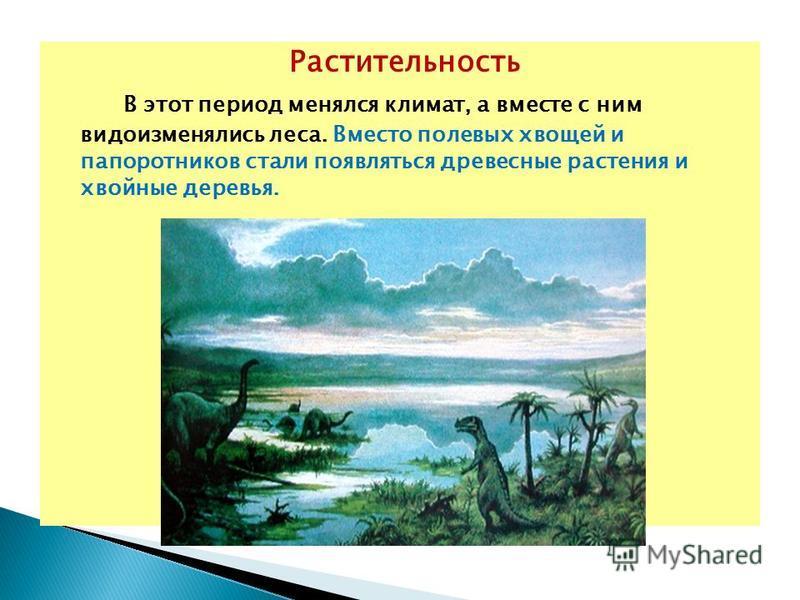 Растительность В этот период менялся климат, а вместе с ним видоизменялись леса. Вместо полевых хвощей и папоротников стали появляться древесные растения и хвойные деревья.