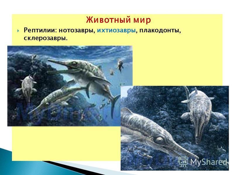 Животный мир Рептилии: нотозавры, ихтиозавры, плакодонты, склерозавры.