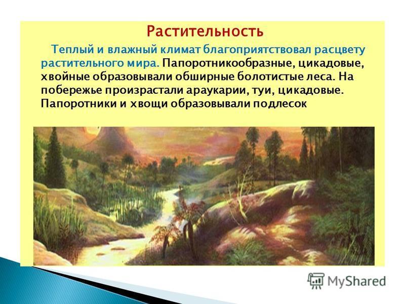 Растительность Теплый и влажный климат благоприятствовал расцвету растительного мира. Папоротникообразные, цикадовые, хвойные образовывали обширные болотистые леса. На побережье произрастали араукарии, туи, цикадовые. Папоротники и хвощи образовывали