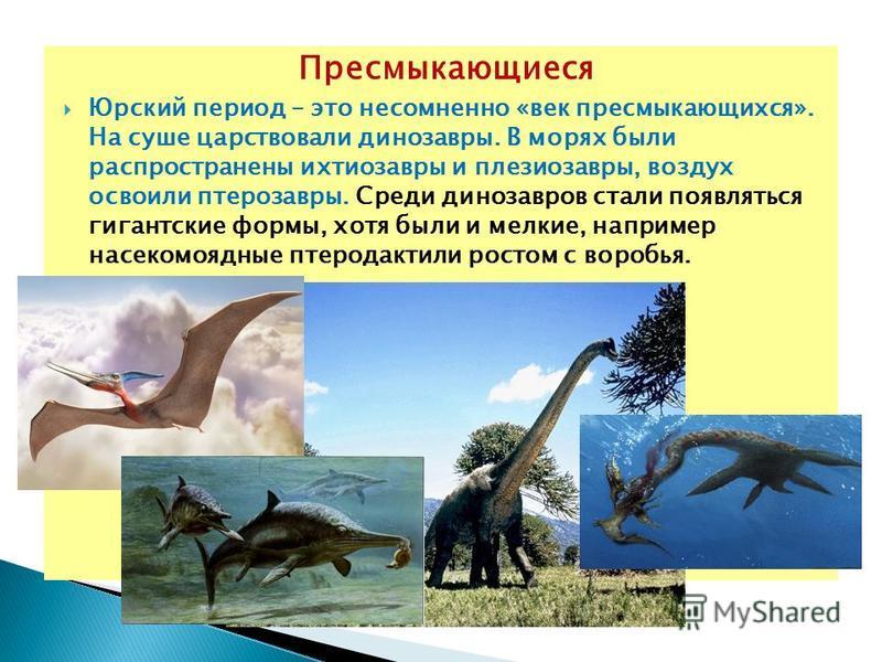 Пресмыкающиеся Юрский период – это несомненно «век пресмыкающихся». На суше царствовали динозавры. В морях были распространены ихтиозавры и плезиозавры, воздух освоили птерозавры. Среди динозавров стали появляться гигантские формы, хотя были и мелкие